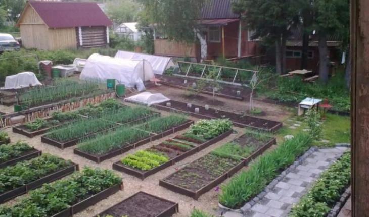 Садовый мини-участок: как всё вместить