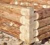 Виды хвойных деревьев для строительства дома