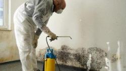 Действия по уничтожению грибка и плесени в ванной комнате
